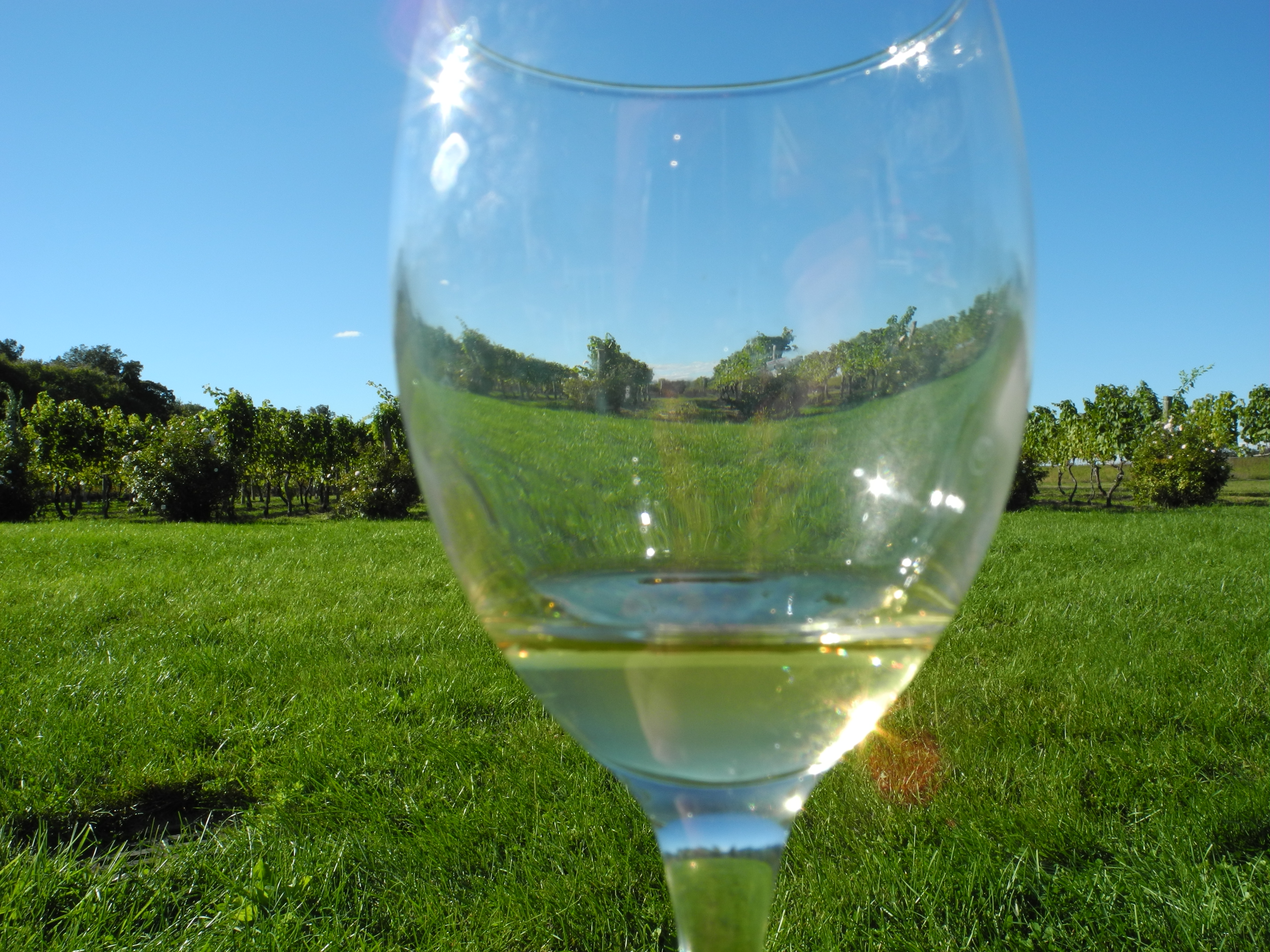 Wino na Long Island